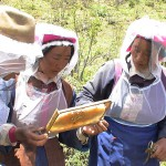 Local farmers of the Hamagu Bee project in Yunnan.