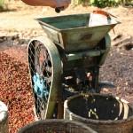 La gangue des cerises de café est retirée par cette machine.