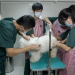 Grooming is a new service offered at the Stone & Beck Shunyi clinic.