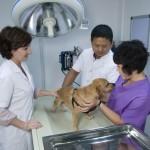 Dr Céline Clément and Dr Stone examin a patient.