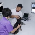 3.石益兵医生在贵宾室里检查一只病犬