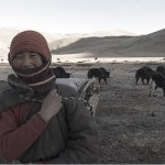 A nomad on the Tibetan plateau with her herd of yaks.