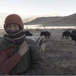 一名游牧民族妇女在青藏高原上放牧她的牦牛群。