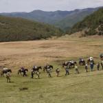 Un groupe de randonneurs accompagné par Red Rock entre Dali et Shaxi sur la route du thé et des chevaux dans la province du Yunnan.